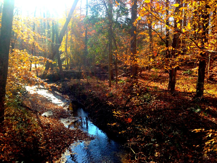 Autumn creek and #mindfulness - www.alliepottswrites.com