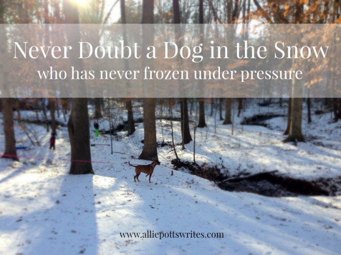 Never #doubt a dog in the snow - www.alliepottswrites.com