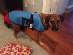 Dog condiment coat